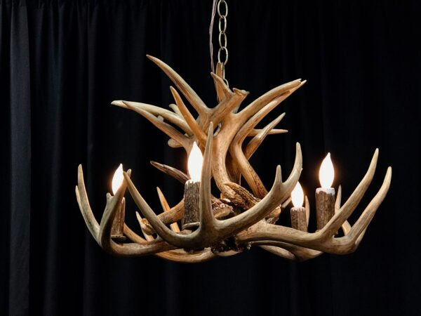 Whitetail chandelier