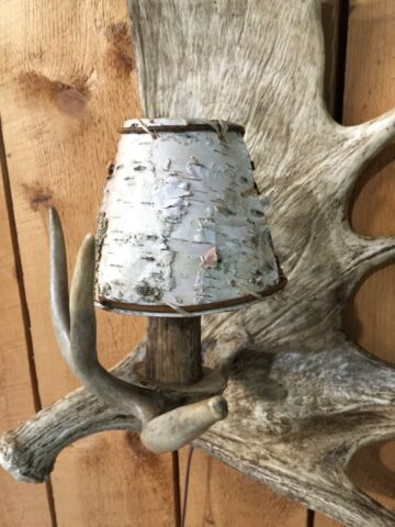 Sconce moose antler closeup