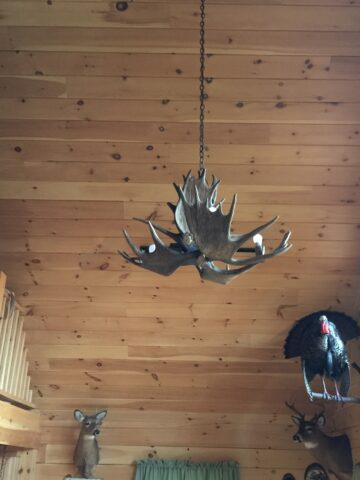 moose small chandelier installed