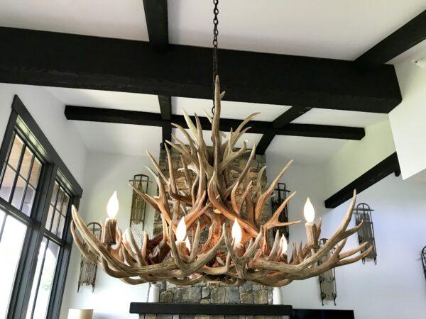 oblong medium mule deer antler chandelier